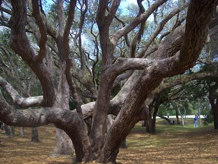tree play2