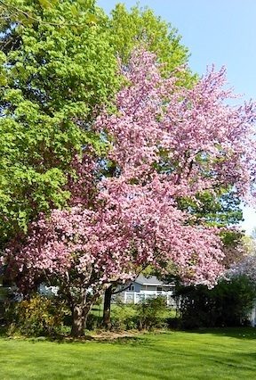 Spring color1