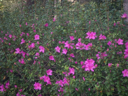 Feb flowers2