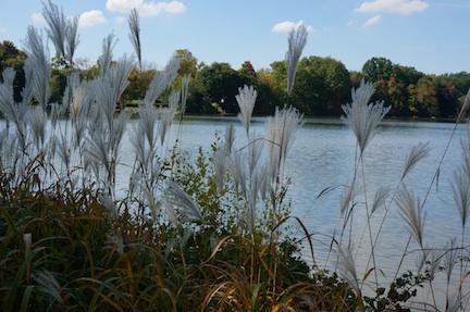 Autumn grass 1