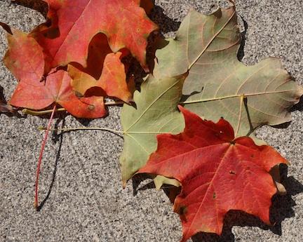 Autumn14 1