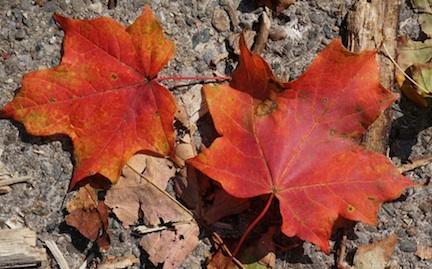 Autumn14 2