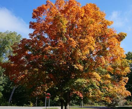 Autumn14 3