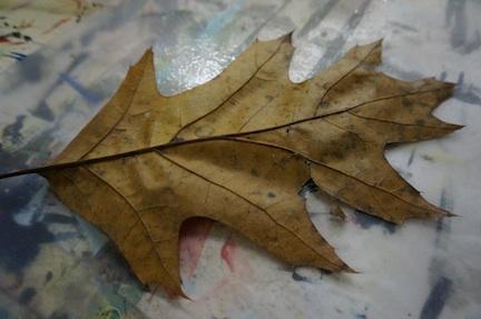 Leaf prep 1