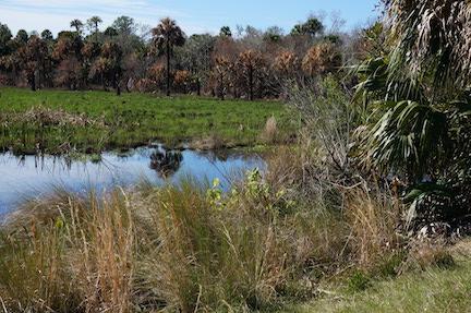Natural Florida 1