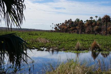 Natural Florida 2