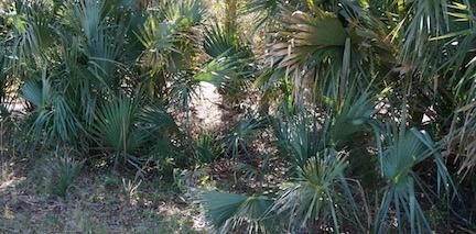 Natural Florida 5