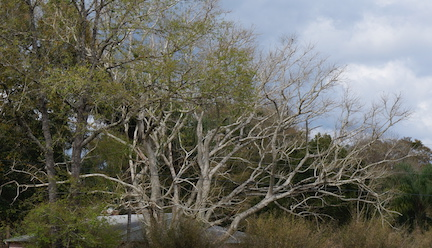 Spring Garden tree 1