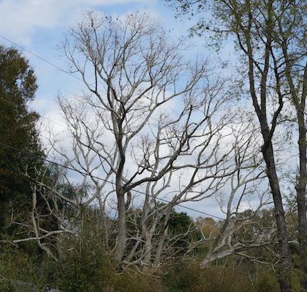 Spring Garden tree 3