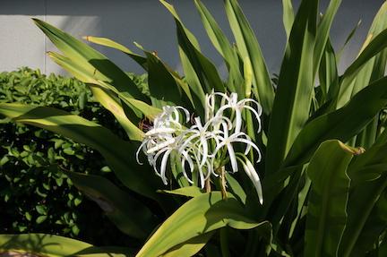 florida-flora-4