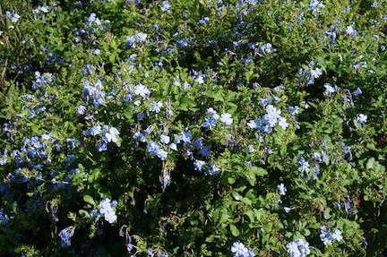florida-flora-6