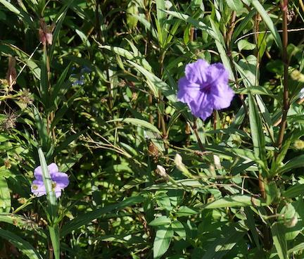 florida-flora-8