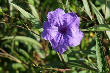 florida-flora-9